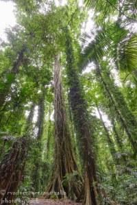 Dorrigo Rainforest-1717