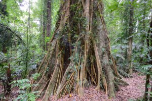 Dorrigo Rainforest-1719