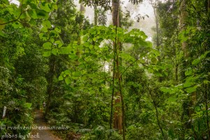 Dorrigo Rainforest-1733