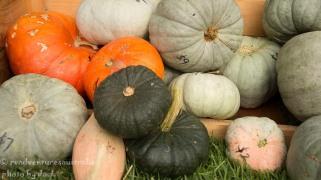 Pumpkins for sale. Gloucester farmers market