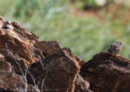 Broken Hill-Living Desert Park