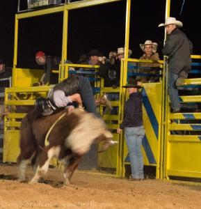 Bull riding Jandowae Qld-7621