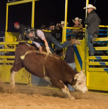 Bull riding Jandowae Qld-7622