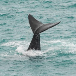 A whales tail or Tail of a Whale