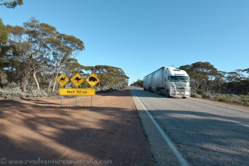 All sorts of dangers on this road. Camels, Kangaroos and Wombats