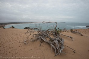 Fowlers Bay Conservation Park South Australia