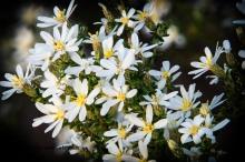 Decres Bay wildflowers