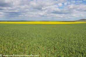 Grain and Canola near Kimba