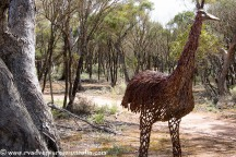Emu sculpture, Roora walking trail. Kimba SA